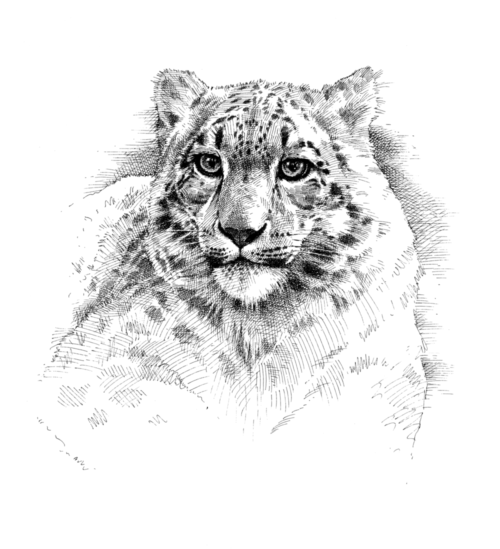 Snow Leopard finish wb.jpg