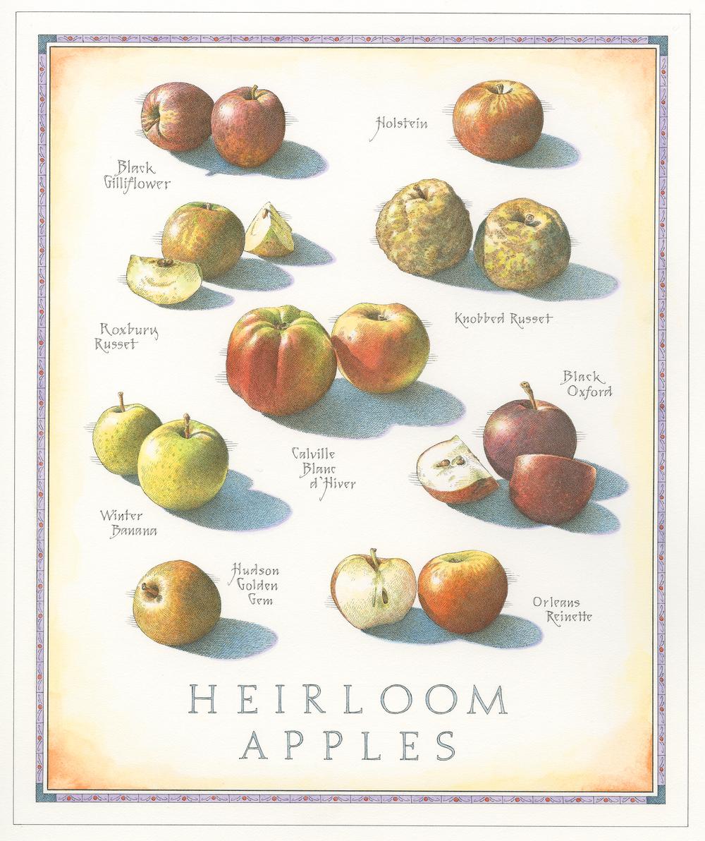 Heirloom Apples A finish smalll 001.jpg
