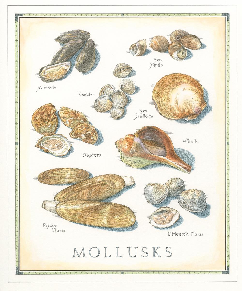 Mollusks finish001.jpg