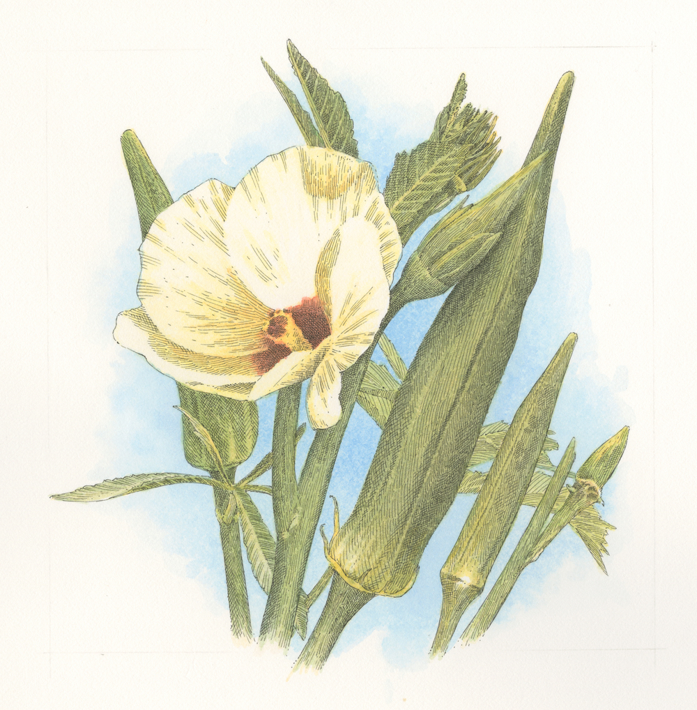 Okra finish001.jpg
