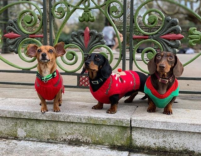 Daphne and friends are wearing their Christmas jumpers. Will you be donning yours on Friday? As well as a fantastic way of raising money for @savechildrenuk (we'll be sharing the way you can donate and also have a collection box in our cafe), we will give a free choccy to all Christmas jumper wearers. We will also be having a little giveaway for anyone who shares their Christmas jumper pics. So dust off your jumpers. And see you on a Friday?
