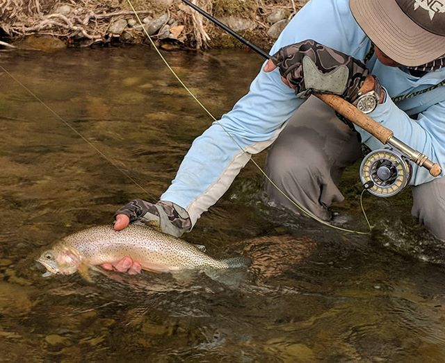 Late afternoon hatches and dry fly catches. #dryfly #ferniestoke #cuttie #trout #troutbum #dancingwater @seaholmautomatic #douglasoutdoors @douglasoutdoors