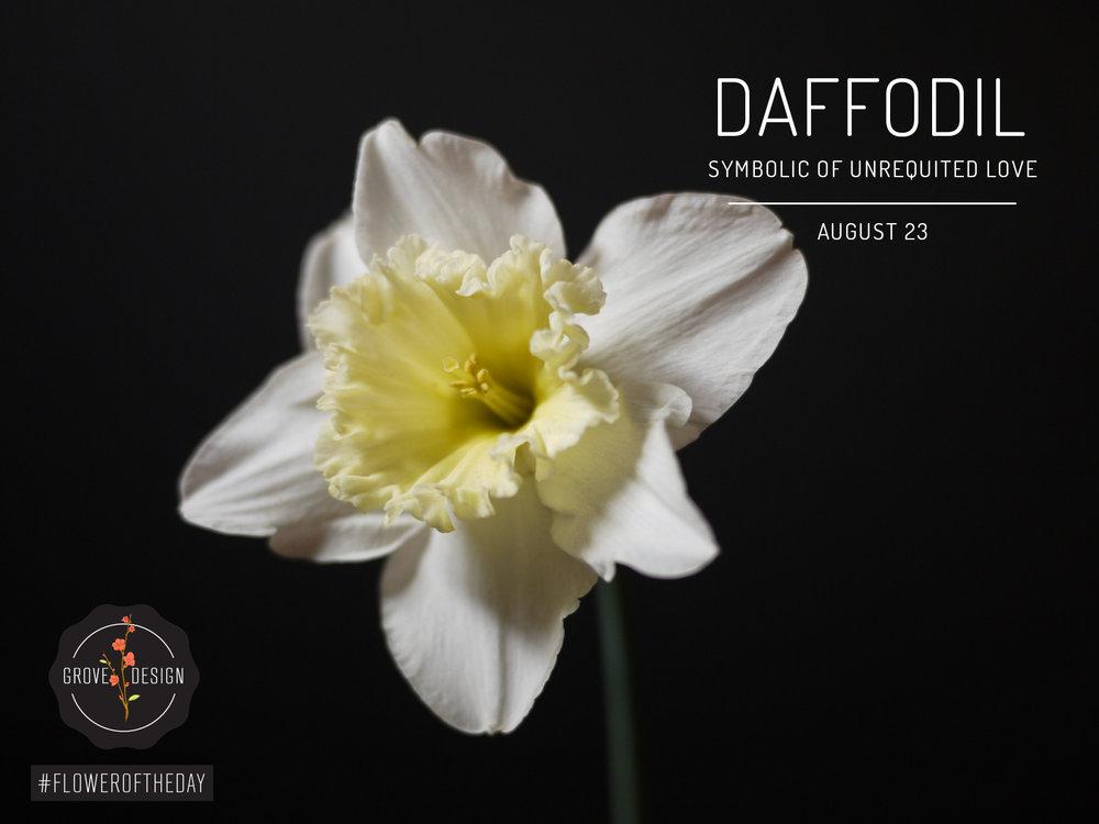 GroveDesign-FOTD-Daffodil.jpg