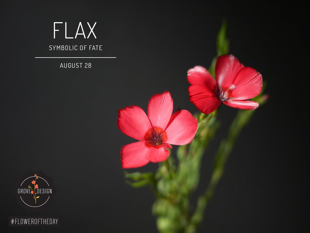 GroveDesign-FOTD-Flax (1).jpg