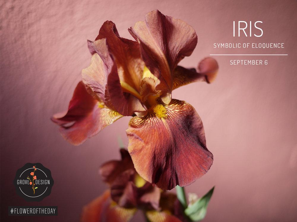 GroveDesign-FOTD-Iris.jpg