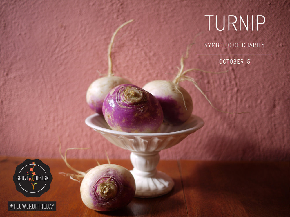 GroveDesign-FOTD-Turnip.jpg