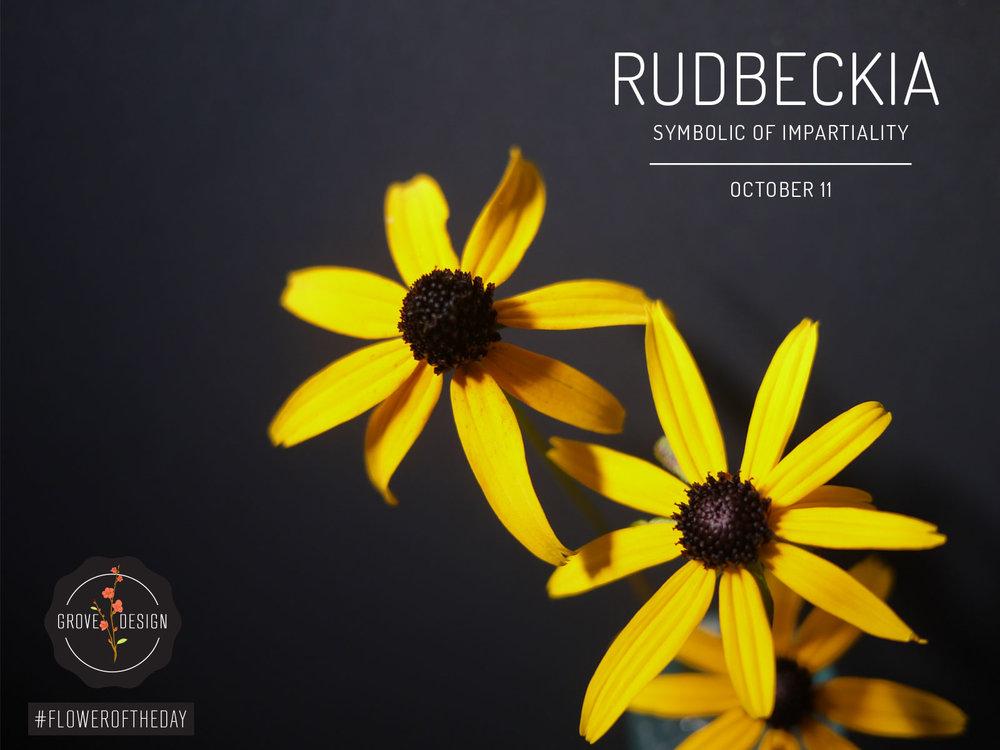 Flower Of The Day Rudbeckia Grove Design