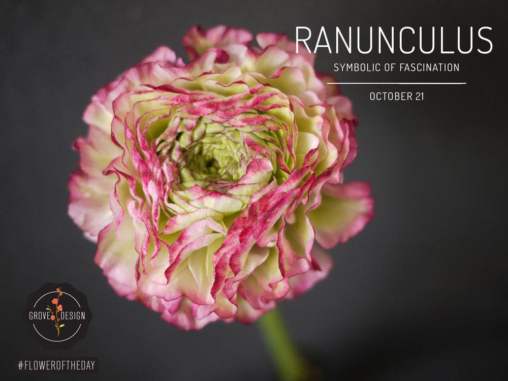 GroveDesign-FOTD-Ranunculus.jpg