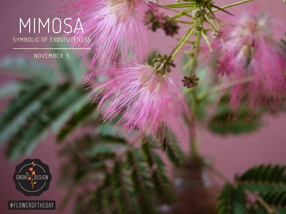 GroveDesign-FOTD-Mimosa.jpg