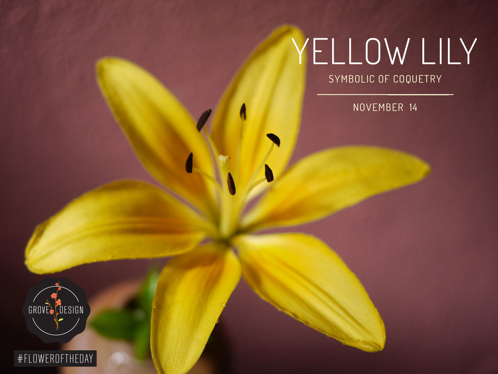 GroveDesign-FOTD-YellowLily (1).jpg