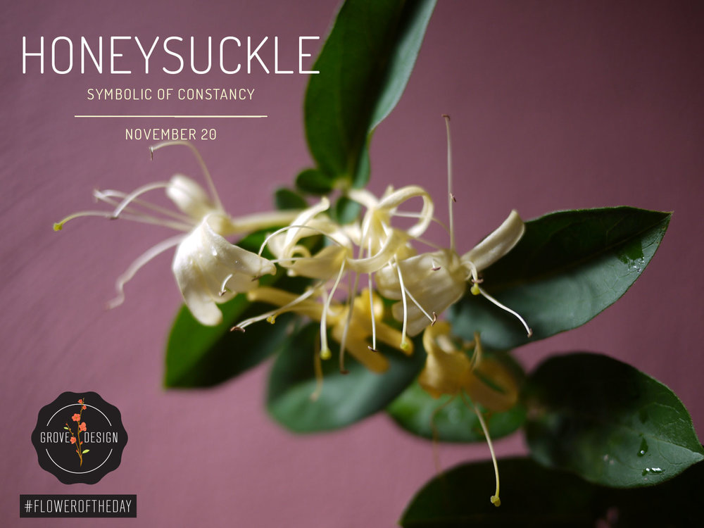 GroveDesign-FOTD-Honeysuckle.jpg