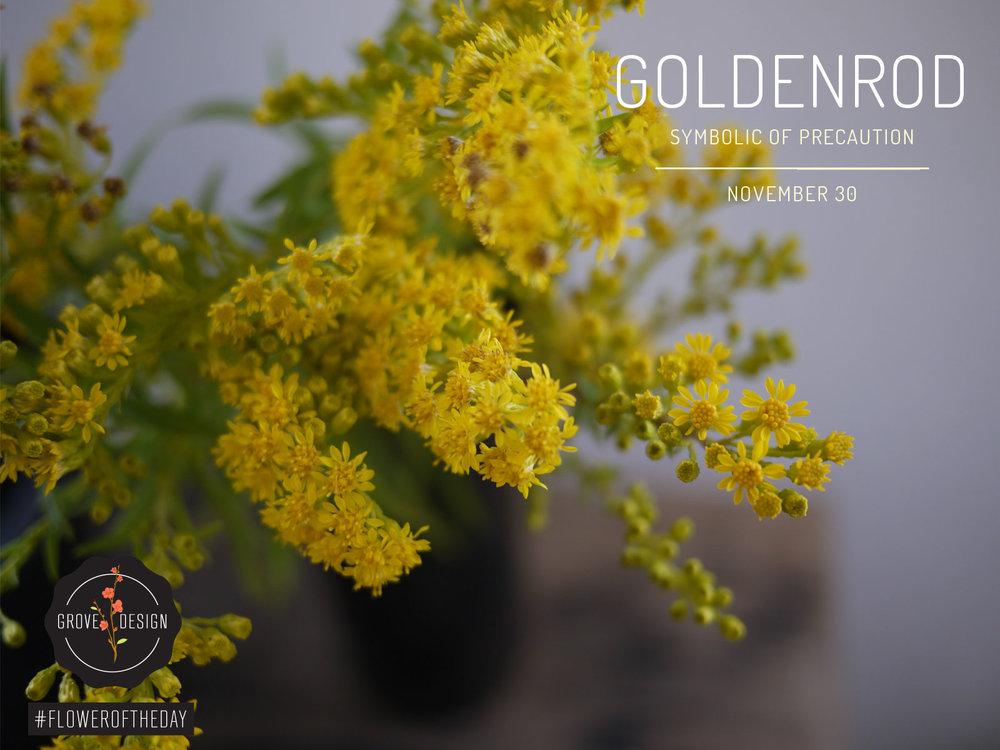 GroveDesign-FOTD-Goldenrod.jpg