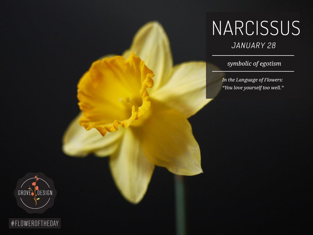 FOTD_Narcissus.jpg
