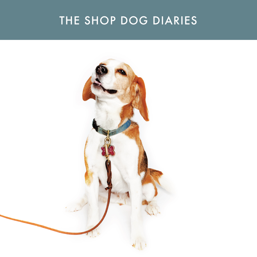 Ann Patchett Features shop dogs-01.jpg