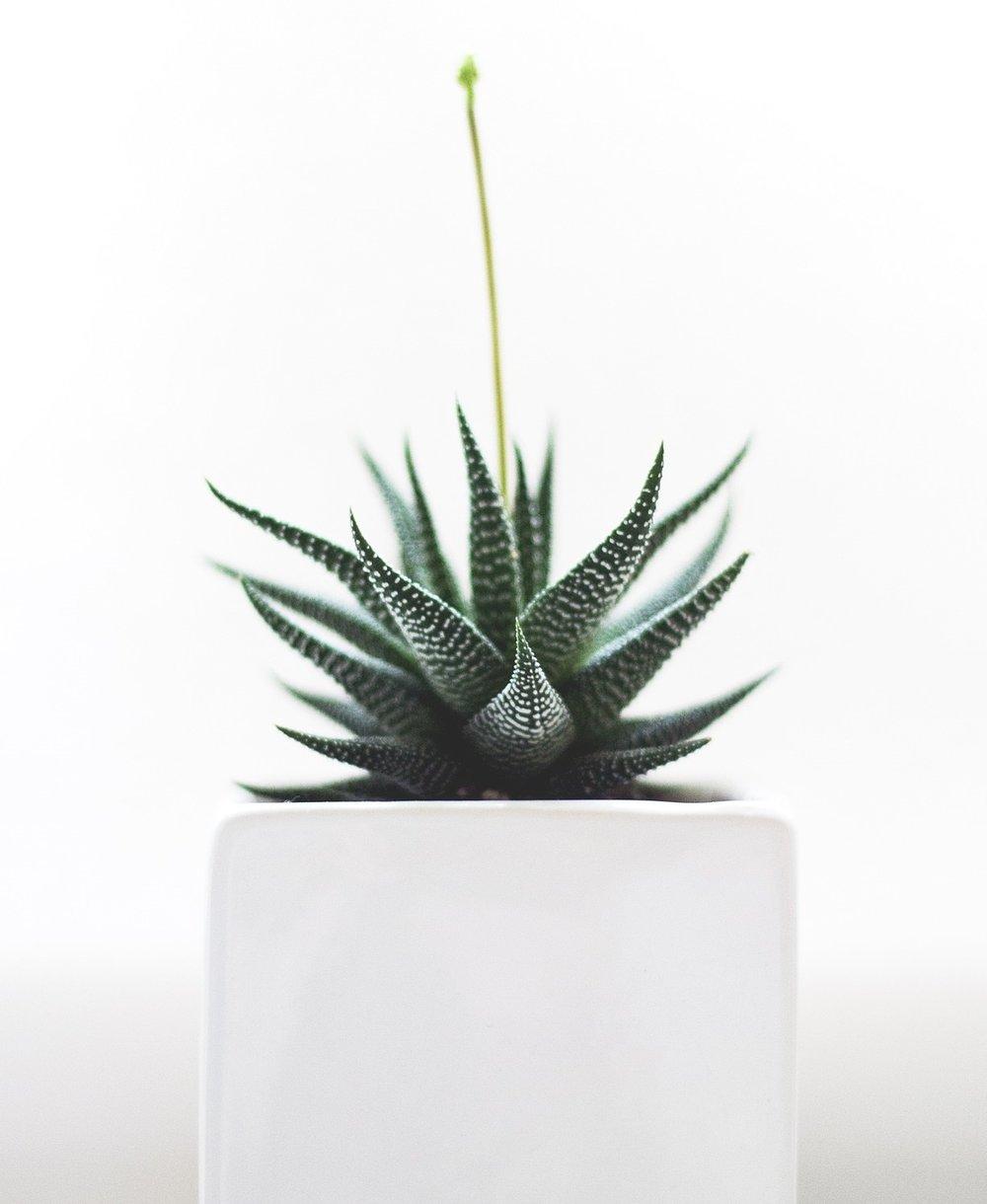 plant-1842299_1920.jpg