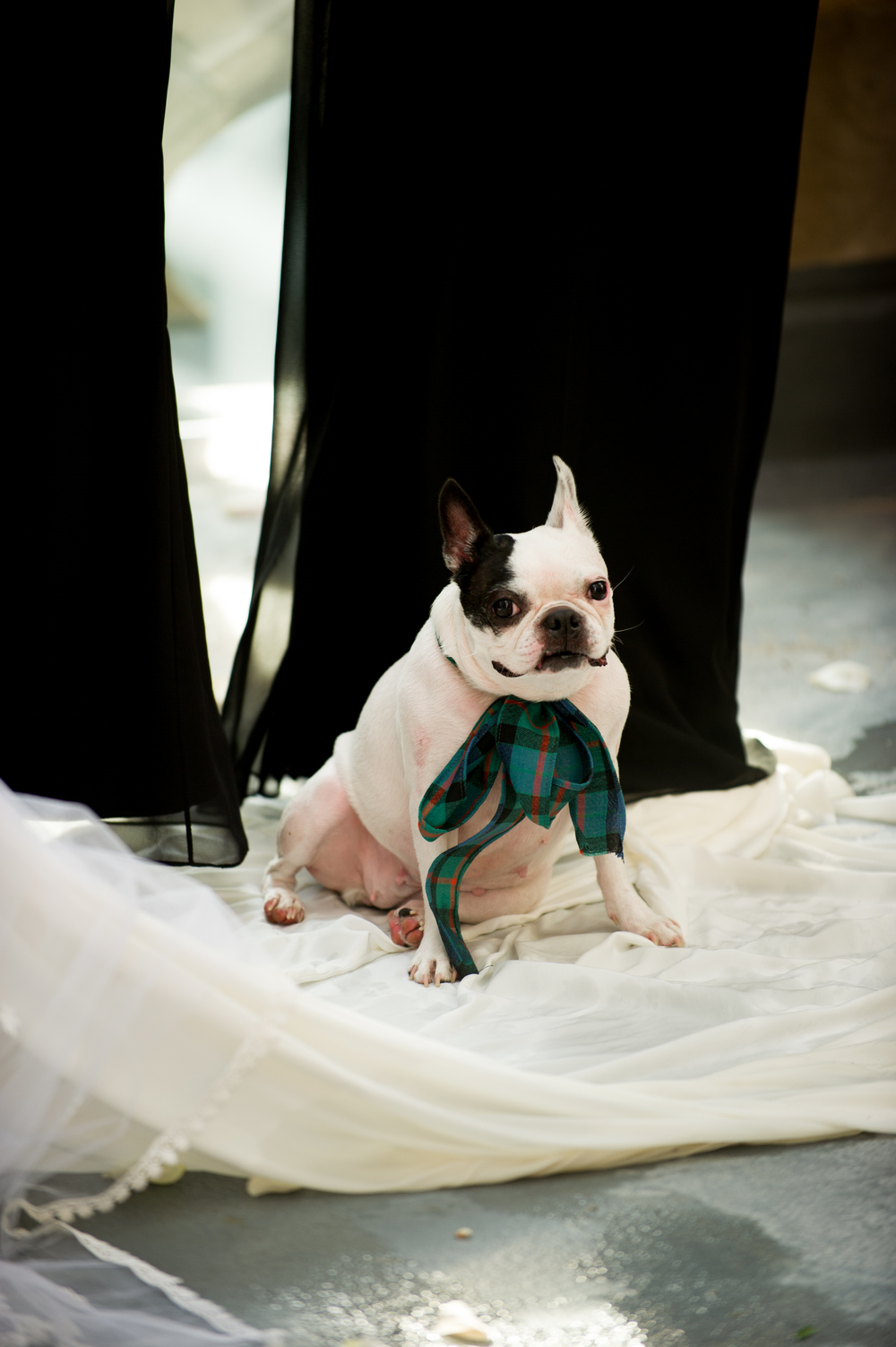 Dog in Wedding Chicago