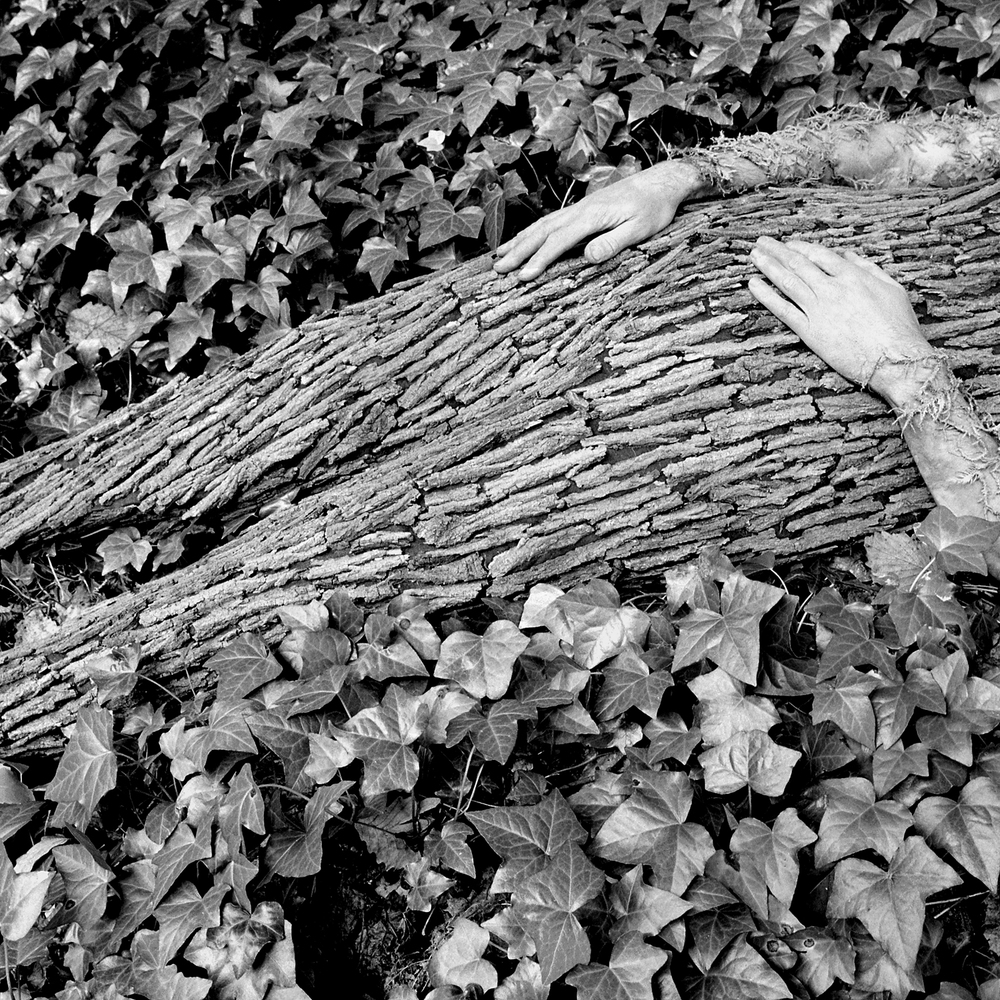 Trunk, 2005, archival pigment print on paper