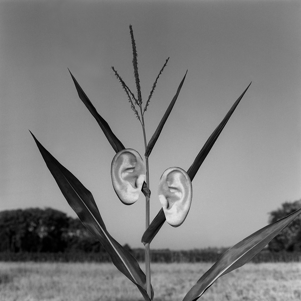 Ears, 2004, archival pigment print on paper