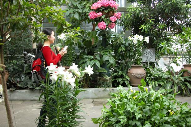 In the Garden 2.jpg