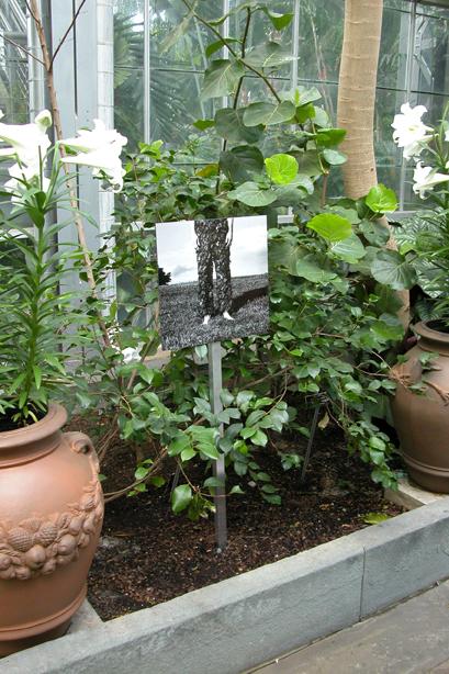 In the Garden 6.jpg