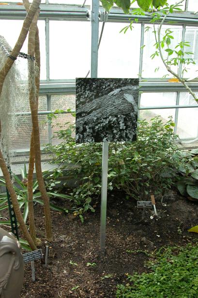 In the Garden 8.jpg