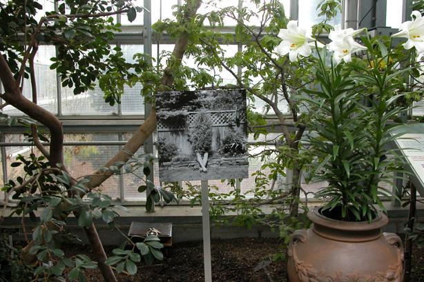 In the Garden 9.jpg