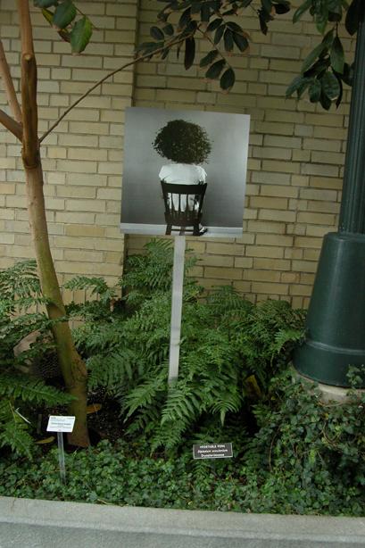 In the Garden 11.jpg