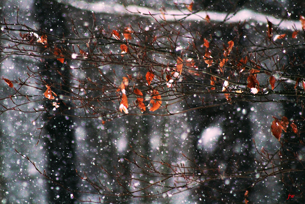 fisrt snow.jpg