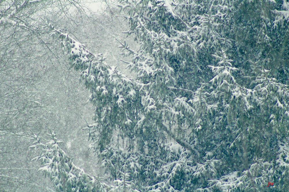 first snow 2016.jpg