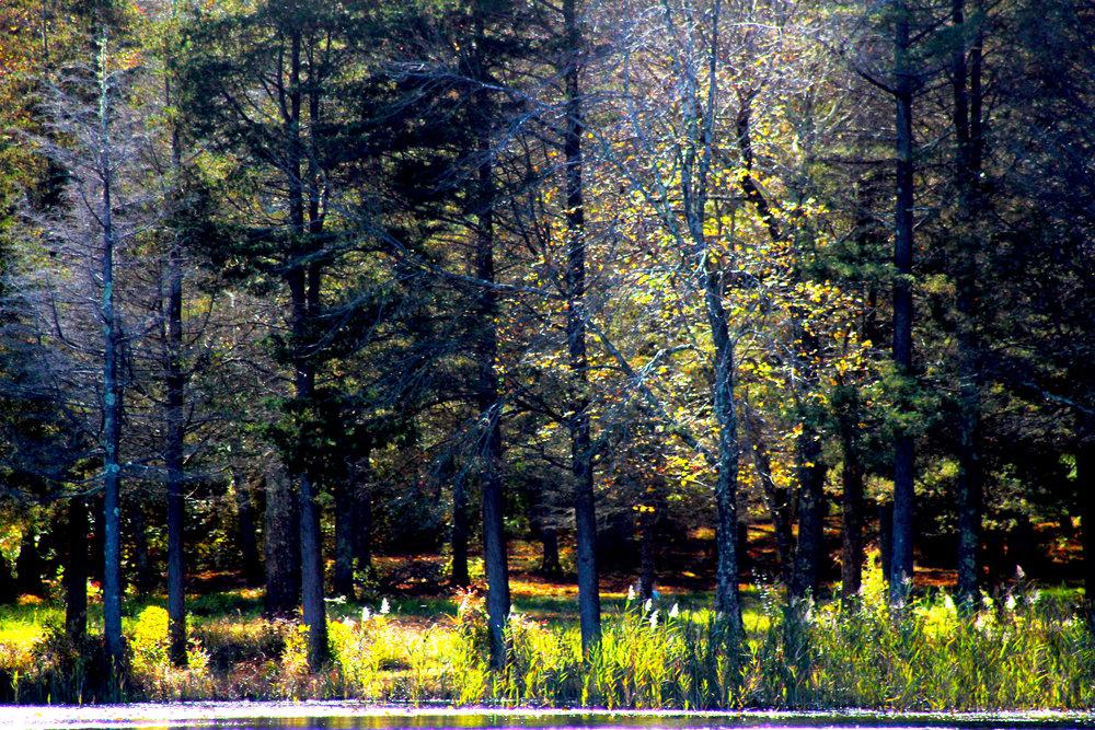 fall2016-66.jpg