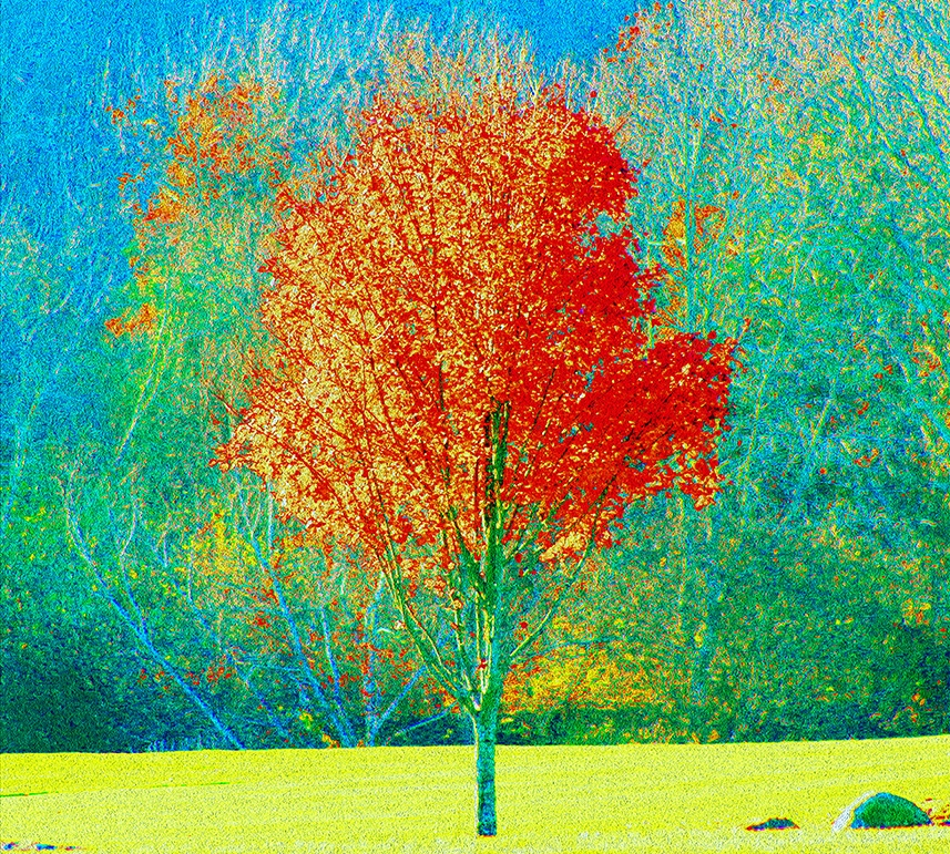 autumn tree website.jpg
