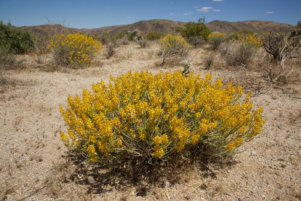 Desert Flower # 2