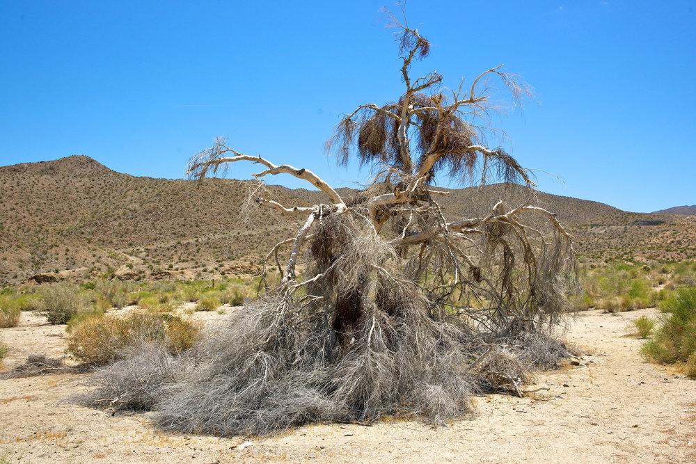 Palms Desert