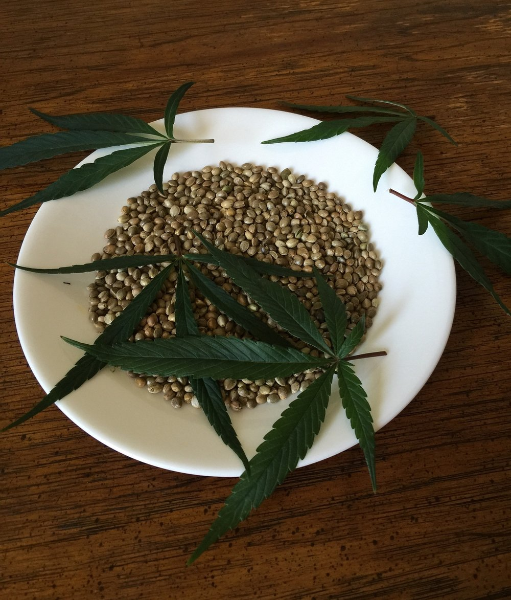 cannabis-seeds-1418321_1920.jpg