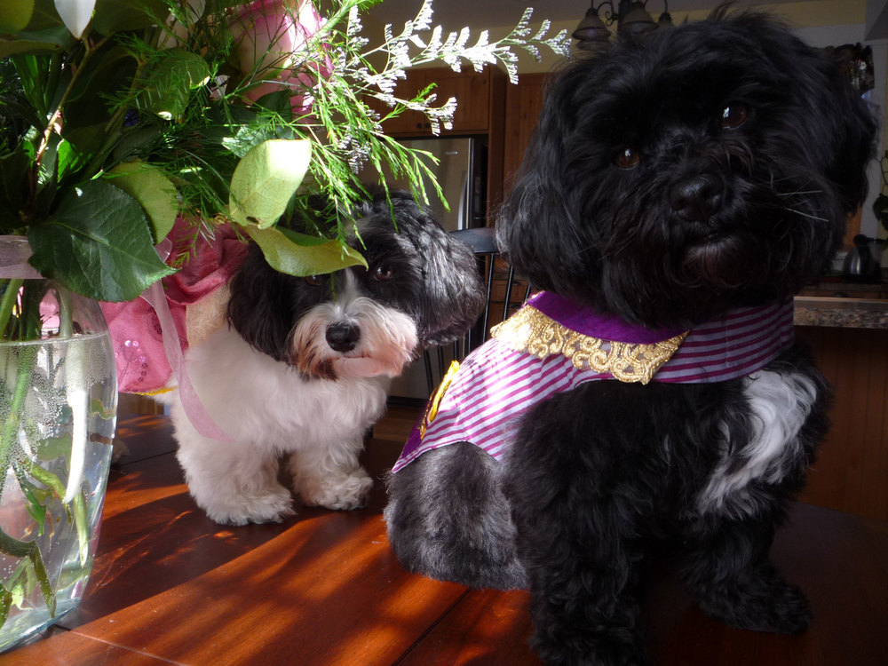 From left to right: Twinkie in pink dress and Kokomo in purple jacket.