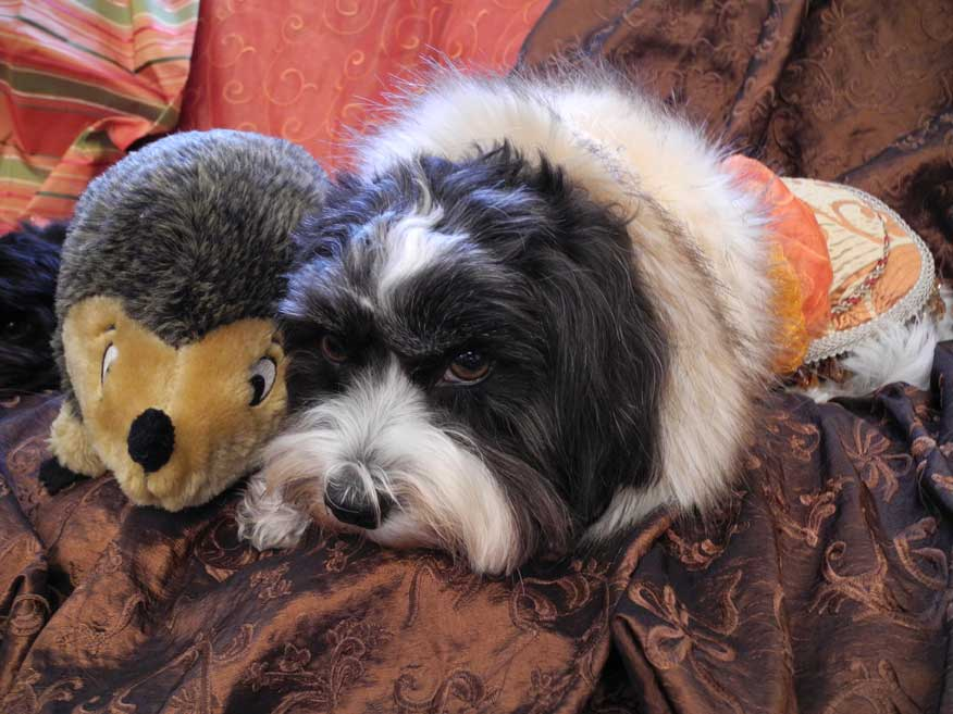 Twinkie in the latest Rococo Dog Creation with her hedge hog   pal.