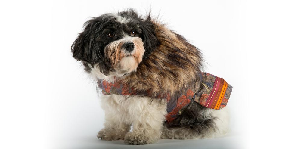 AspenNights_CoolComfort-FurCollar-3_rococo_dog_clothing.jpg