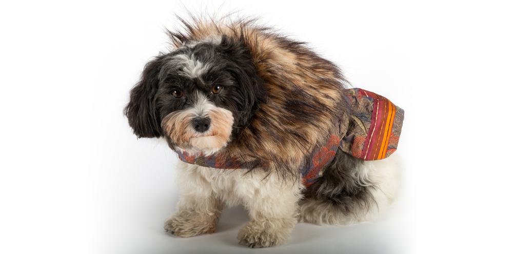 AspenNights_CoolComfort-FurCollar-1_rococo_dog_clothing.jpg