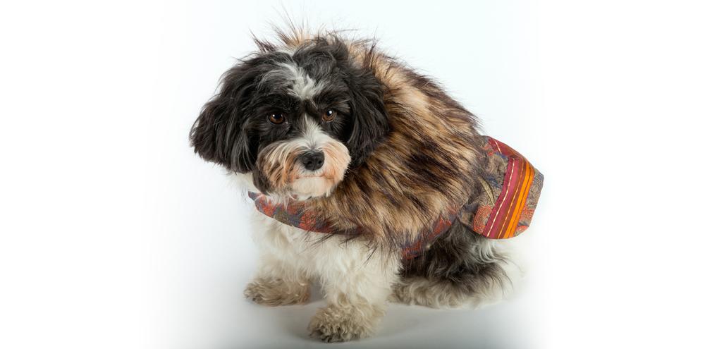 AspenNights_CoolComfort-FurCollar-2_rococo_dog_clothing.jpg
