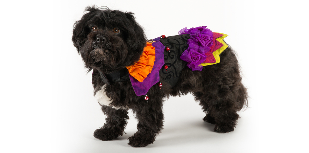 Carnival-Jester-1_rococo_dog_clothing.jpg