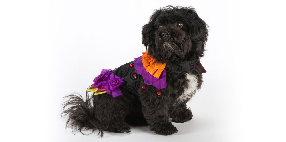 Carnival-Jester-3_rococo_dog_clothing.jpg