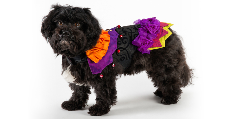 Carnival-Jester-2_rococo_dog_clothing.jpg