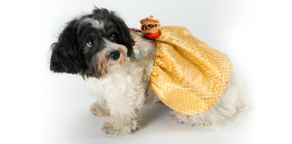 GoldenDream-YellowDress-1_rococo_dog_clothing.jpg