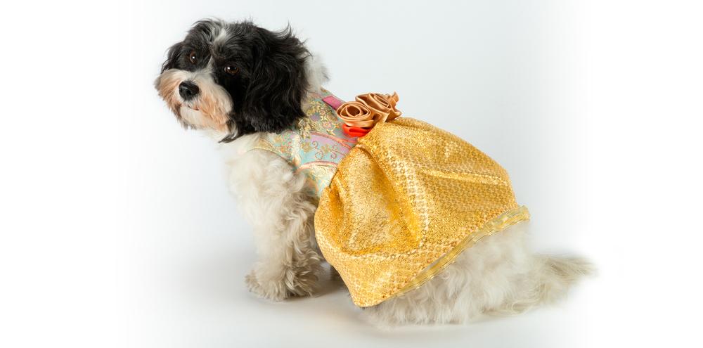 GoldenDream-YellowDress-2_rococo_dog_clothing.jpg