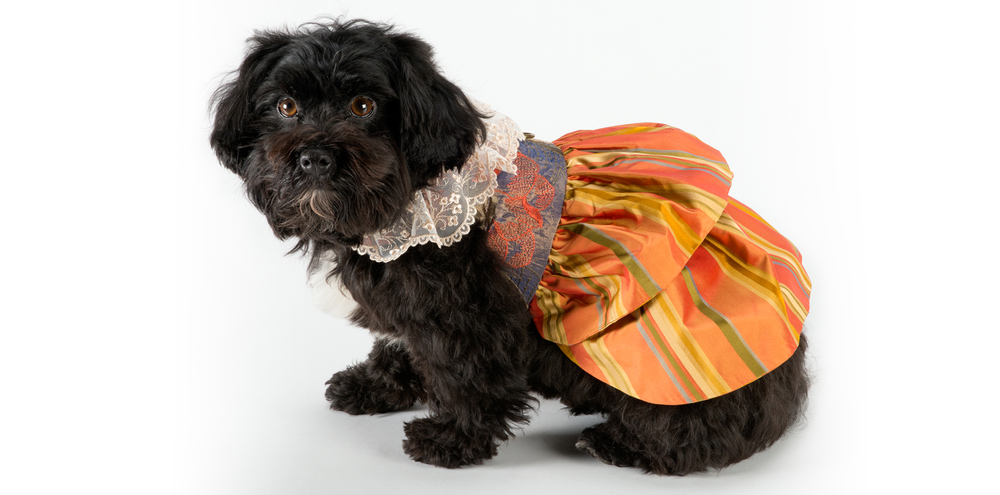 LaceWhimsey-LaceCollar-1_rococo_dog_clothing.jpg