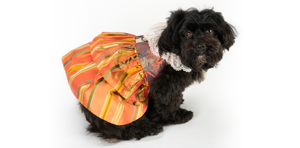 LaceWhimsey-LaceCollar-2_rococo_dog_clothing.jpg
