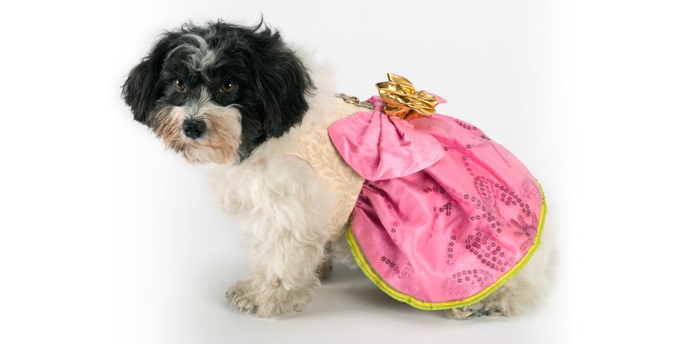 SunshineRoses-PinkDress-1_rococo_dog_clothing.jpg