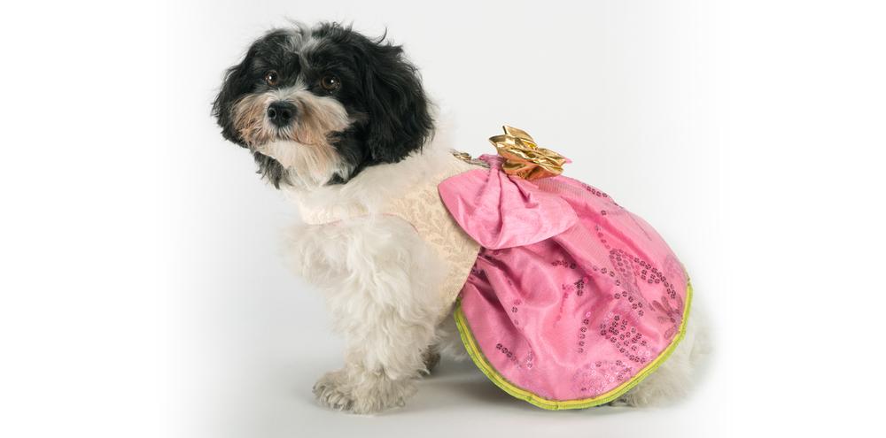 SunshineRoses-PinkDress-2_rococo_dog_clothing.jpg