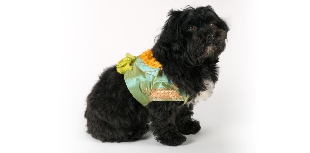 VisitingJacket-ShortJacket-2_rococo_dog_clothing.jpg
