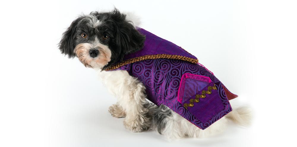 TravellingJacket-PurplePockets-1_rococo_dog_clothing.jpg